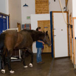 10 Tips for Caring for the Older Horse