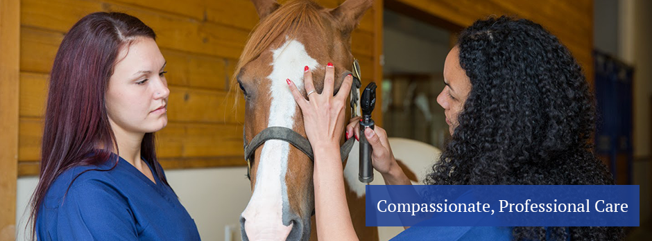 the simple ways to prevent and treat parasites in horses The guide to sustainable, evidence-based horse management and training  the best way to control worms is to  rotation is necessary to prevent resistance in.